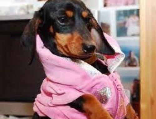 Lulù ovvero un cane attore
